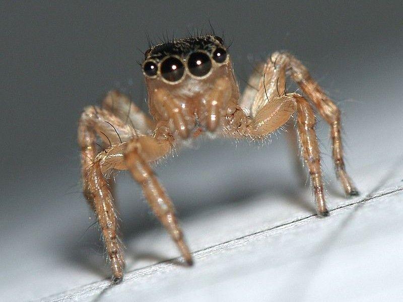 8 astuces naturelles pour lutter contre les araign es la maison vie pratique pinterest. Black Bedroom Furniture Sets. Home Design Ideas