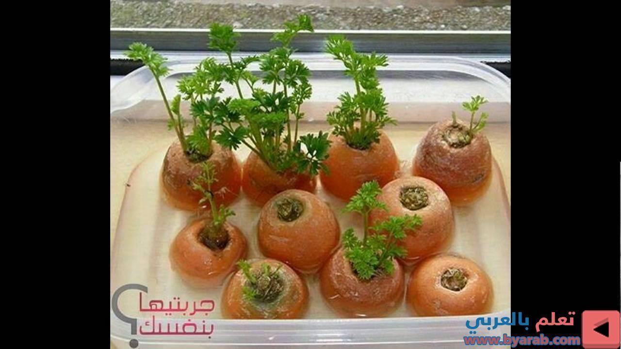 أفكار جميلة للزراعة المنزلية Vegetables Tomato Food