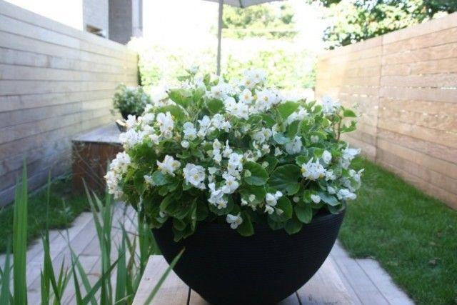 Pot à fleur extérieur en 17 idées fantastiques super tendance ...