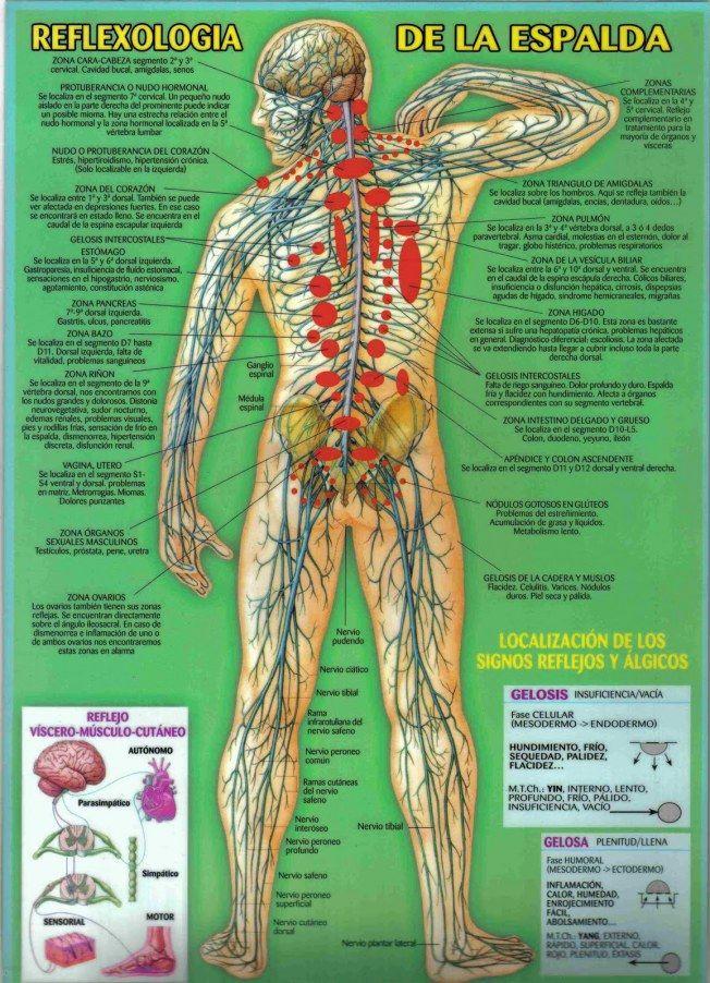 Asombroso Diagrama De Espalda Baja Imágenes - Anatomía de Las ...