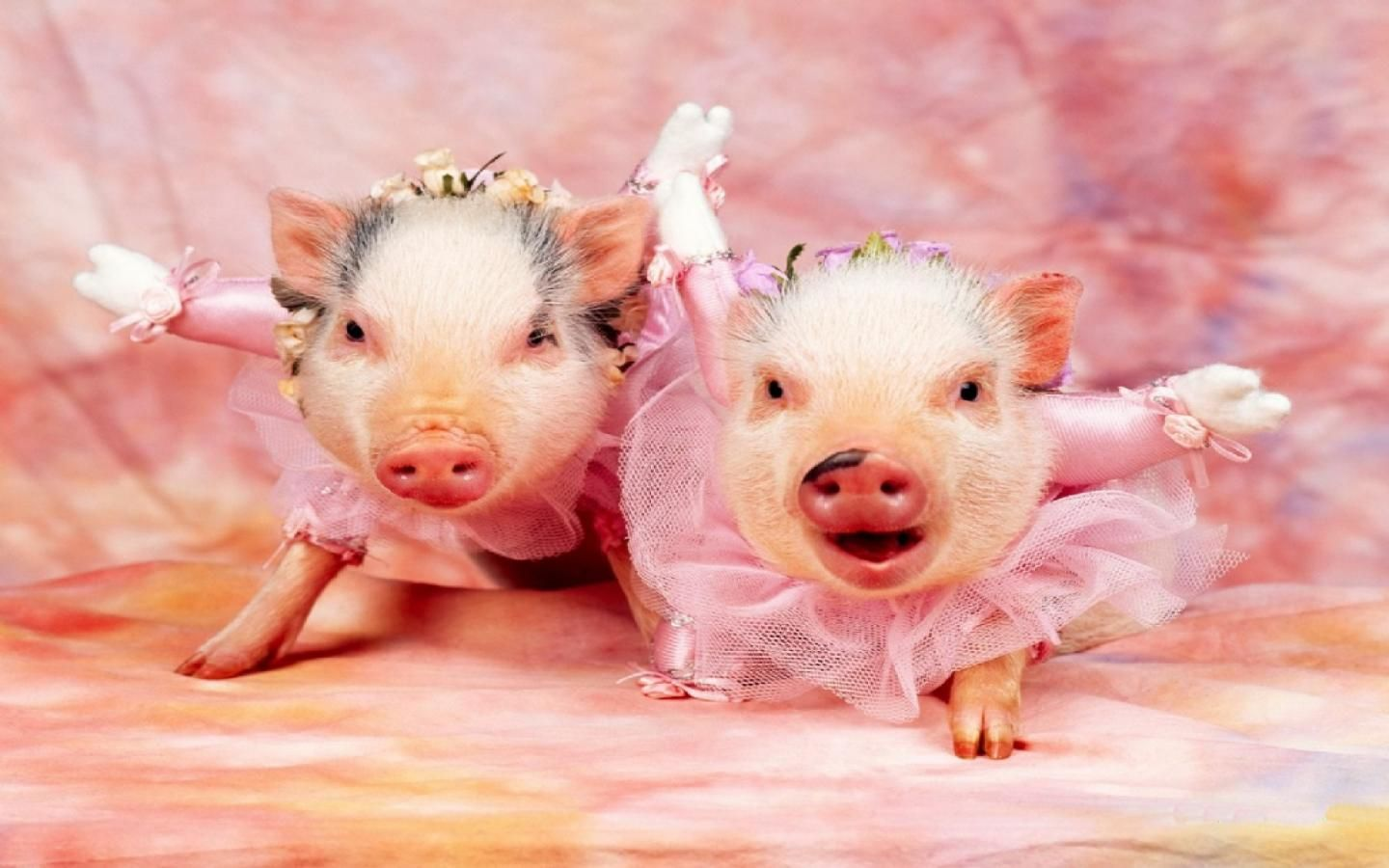 baby Pigs with flowers wallpaper | Real Pig Wallpaper 17571 Hd Wallpapers in Animals - Imagesci.com