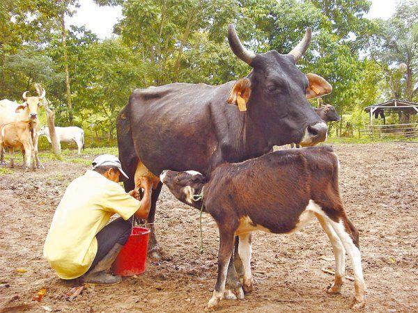 Fotos Ordenando Vacas Buscar Con Google Animals Cow
