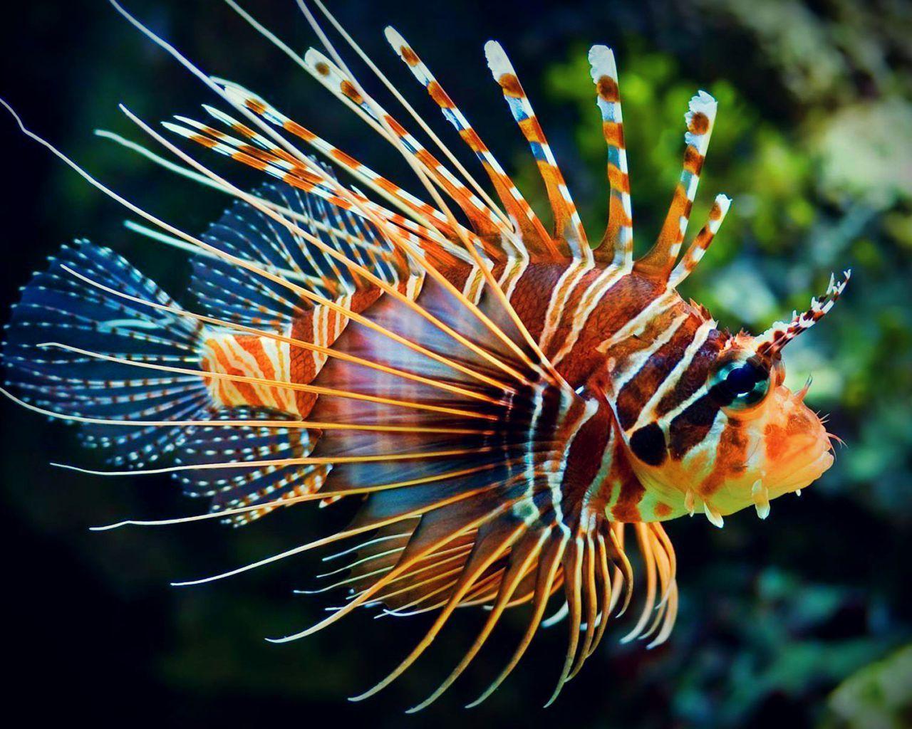картинки экзотических рыб с названиями своему первому авто
