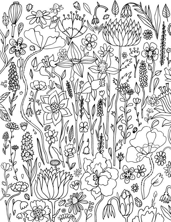 Coloring Pages Of Flowers For Free : Free printable spring flower adult coloring page. download it in