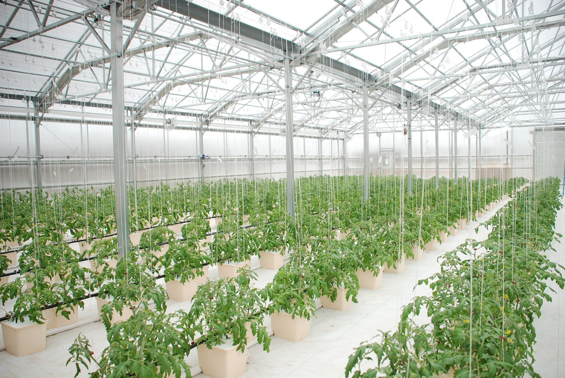 48+Hydroponic Greenhouse