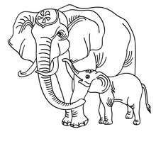 Asian Elephant Coloring Page Are You Looking For ASIAN ANIMALS Pages Hellokids Has