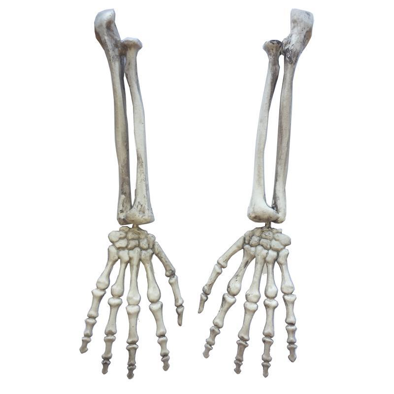 Manos De Calavera Buscar Con Google Skeleton Arm Witch Hands Plastic Skeleton