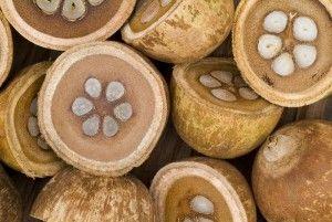 Babaçu pode ajudar na sustentabilidade como fonte de Biodiesel | Pois