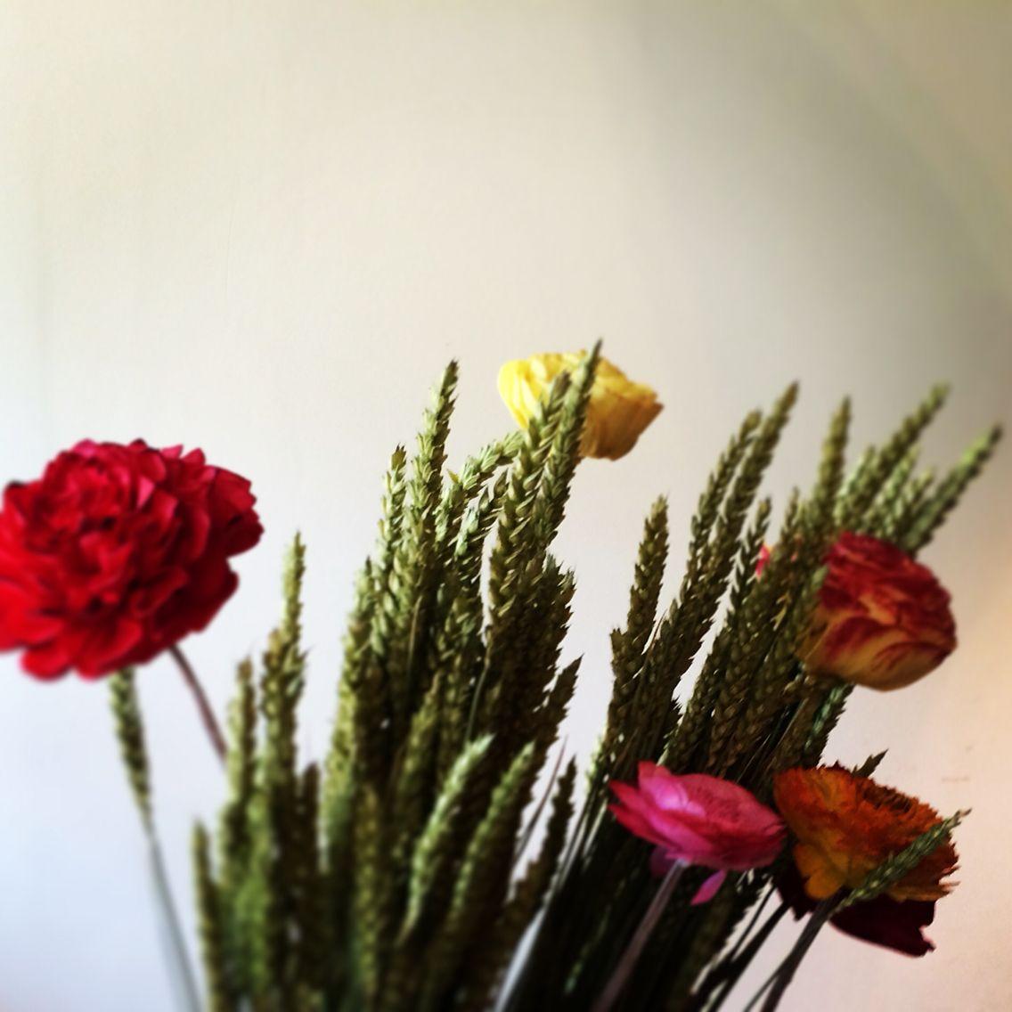 Unreel but enjoyable #bloomsstore #dryflowers #interiordecoration