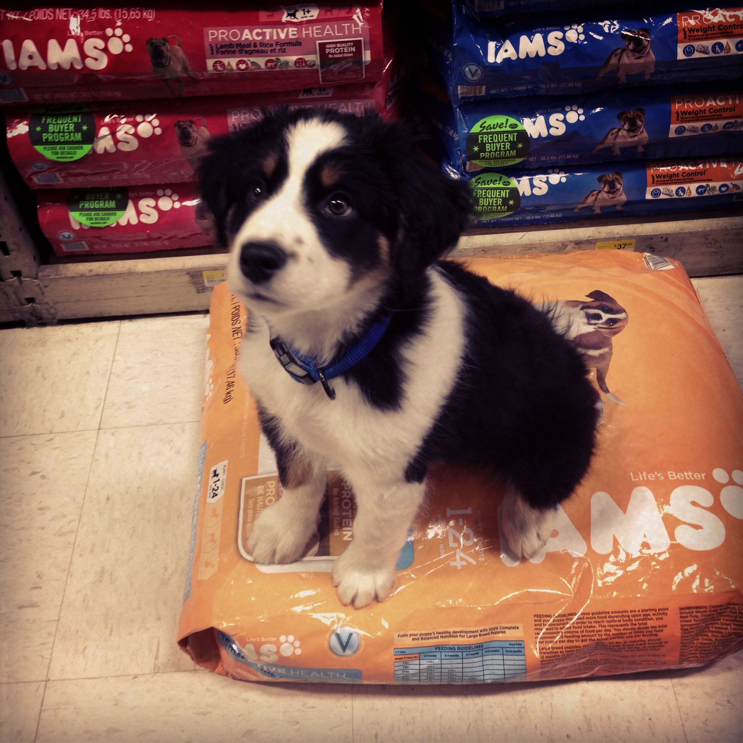 This Little Guy Picked Out His Favorite Iams Puppy Food At