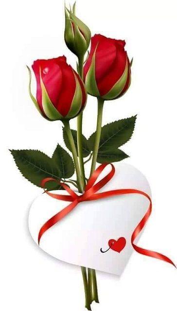 Botão De Rosa Vermelha Jahsaude Feliz Boa Tarde Boa Noite E