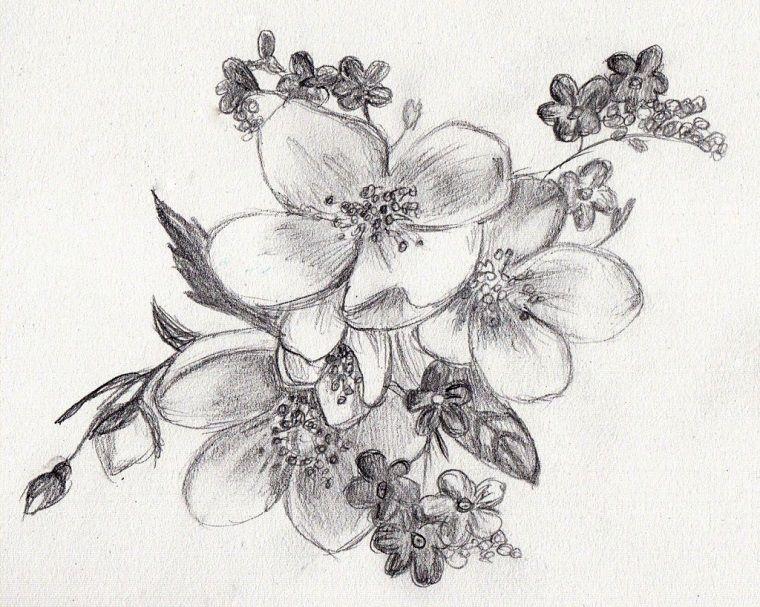 Disegni A Matita Di Fiori Come Disegnare Con Una Matita Sfumature