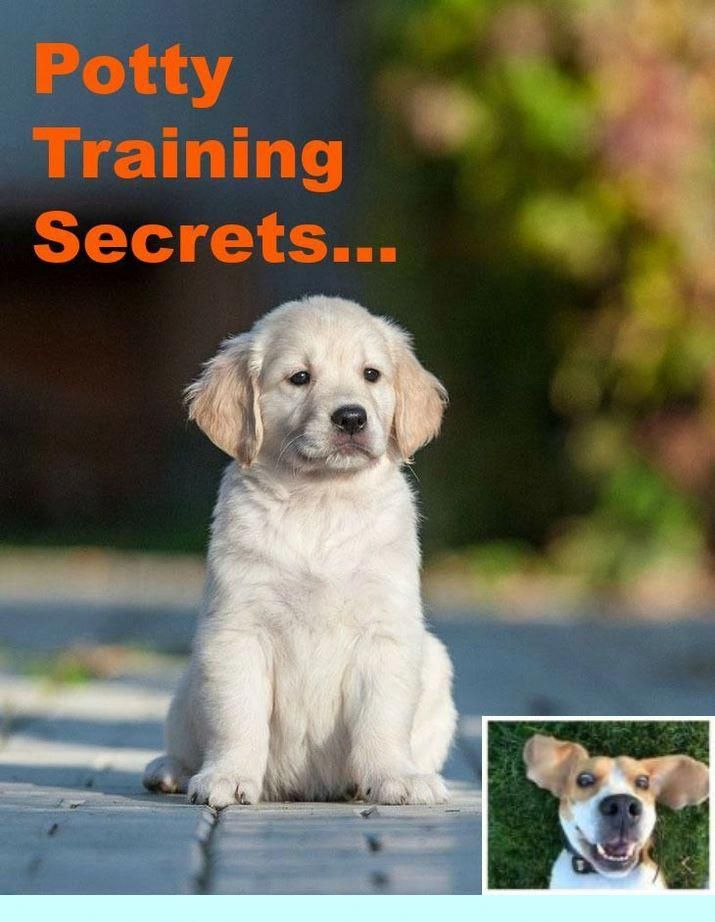 1 Teach Your Dog To Go Outside And Puppy Training Images