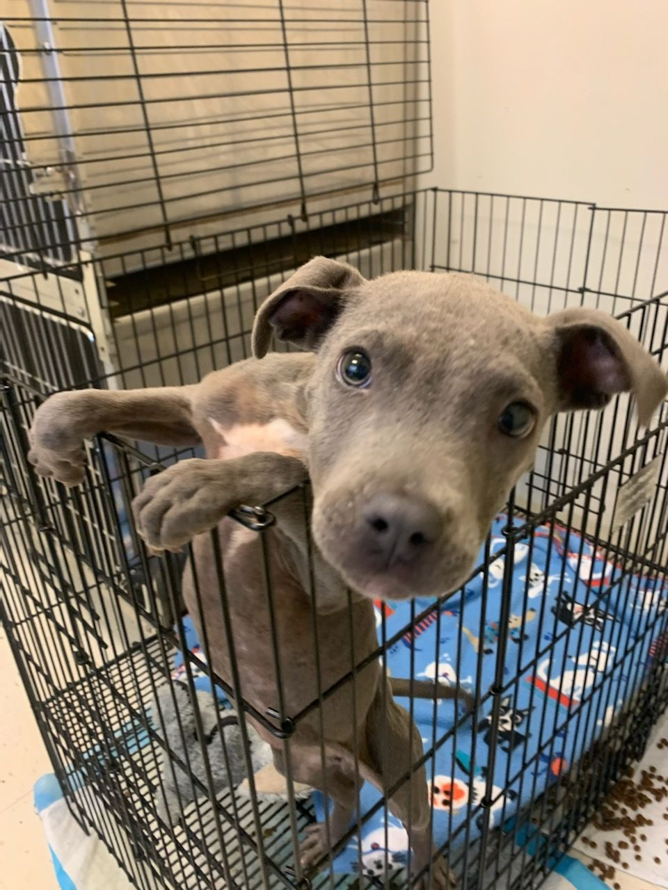 Adopt Seal on in 2020 Dog adoption, Help homeless pets