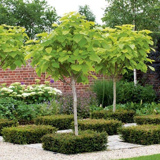 Catalpa bignoniodes \u0027Aurea\u0027 Gardens - Gorgeousness Pinterest