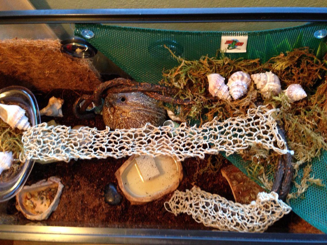 Hermit Crab Tank Setup
