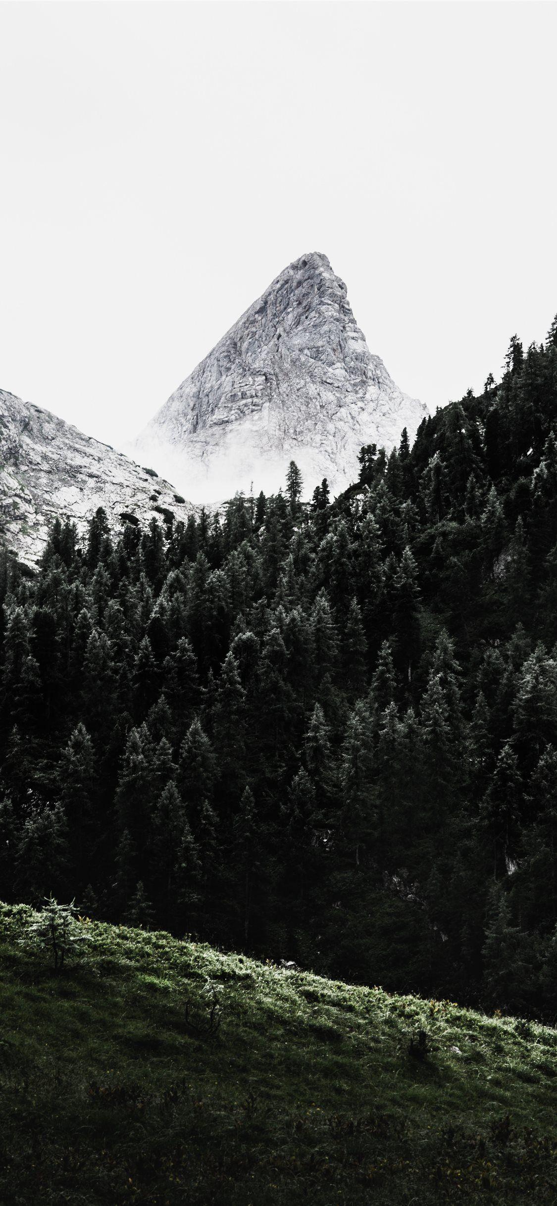 green pine trees across white mountain iPhone 11