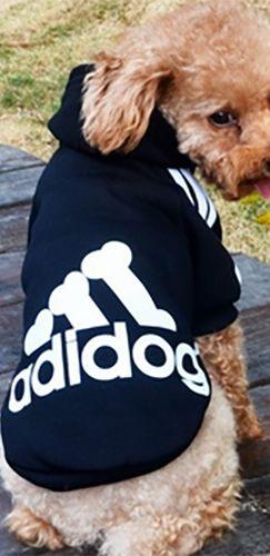 adidas dog