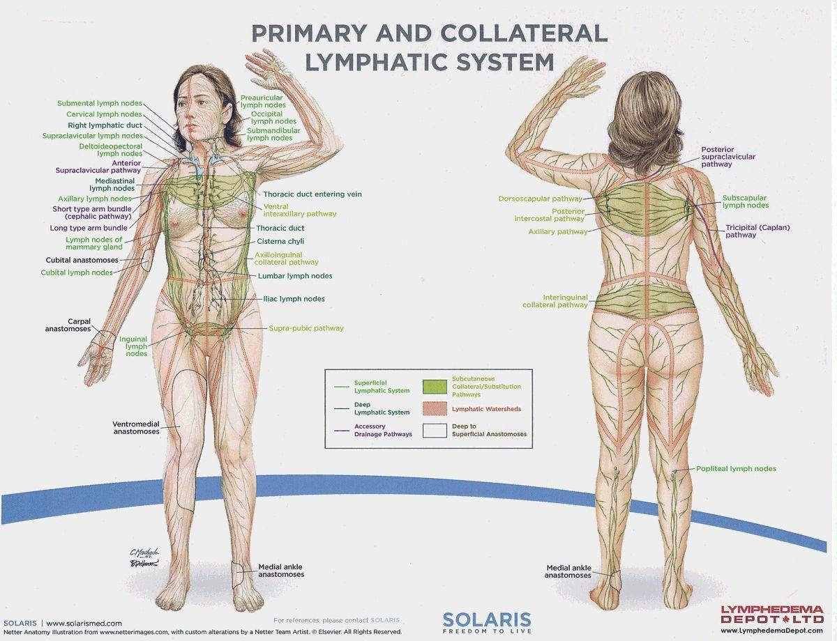 lymph node chart - Mersn.proforum.co