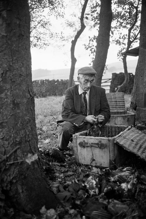 Magnum Photos Photographer Portfolio. Martin Parr GB. England. West Yorkshire. Hebden Bridge. Frank Ideson, Head gamekeeper for the Savile Estate, sorts out dead grouse. Careful records of young and old birds are kept to