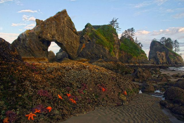 Point of the Arches and Shi Shi Beach, Olympic National Park, Washington State - HOLY Starfish!