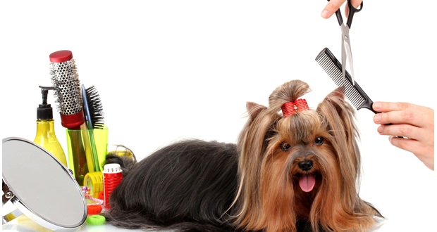 First Steps In Grooming Dog Grooming Dog Tips Advice With Images Pet Grooming Marketing Pet Grooming Dog Grooming