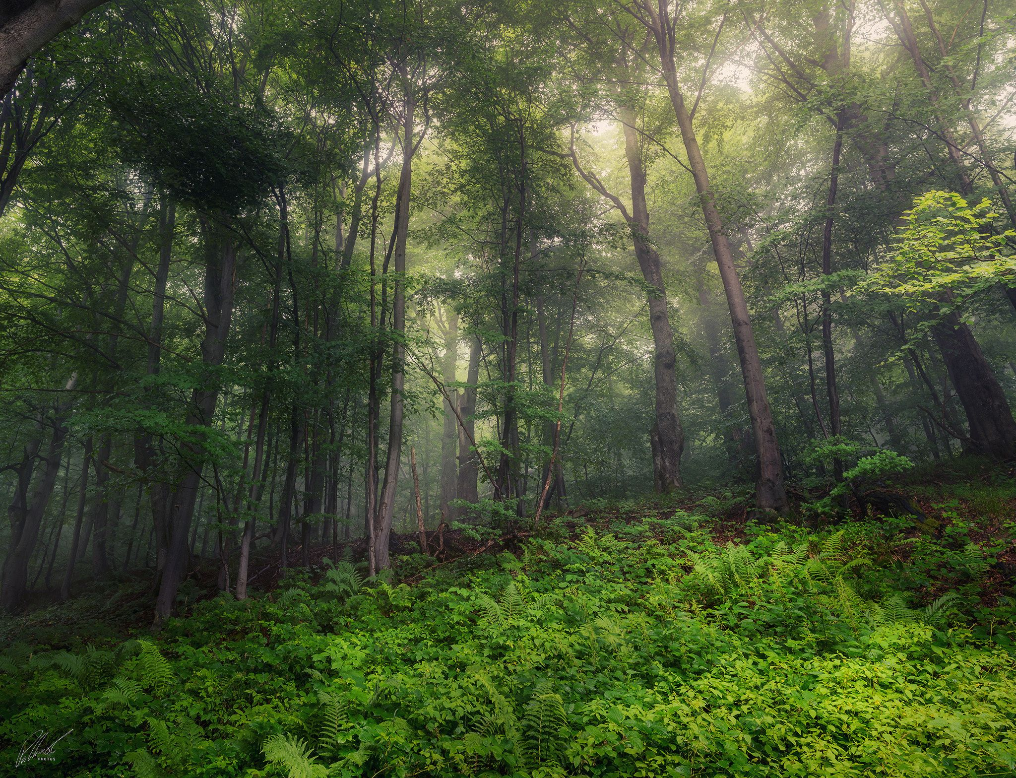 Misty Forest by Jakub Perlikowski on 500px