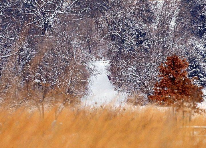 Photo by user visitindiana, caption reads Deer at ...