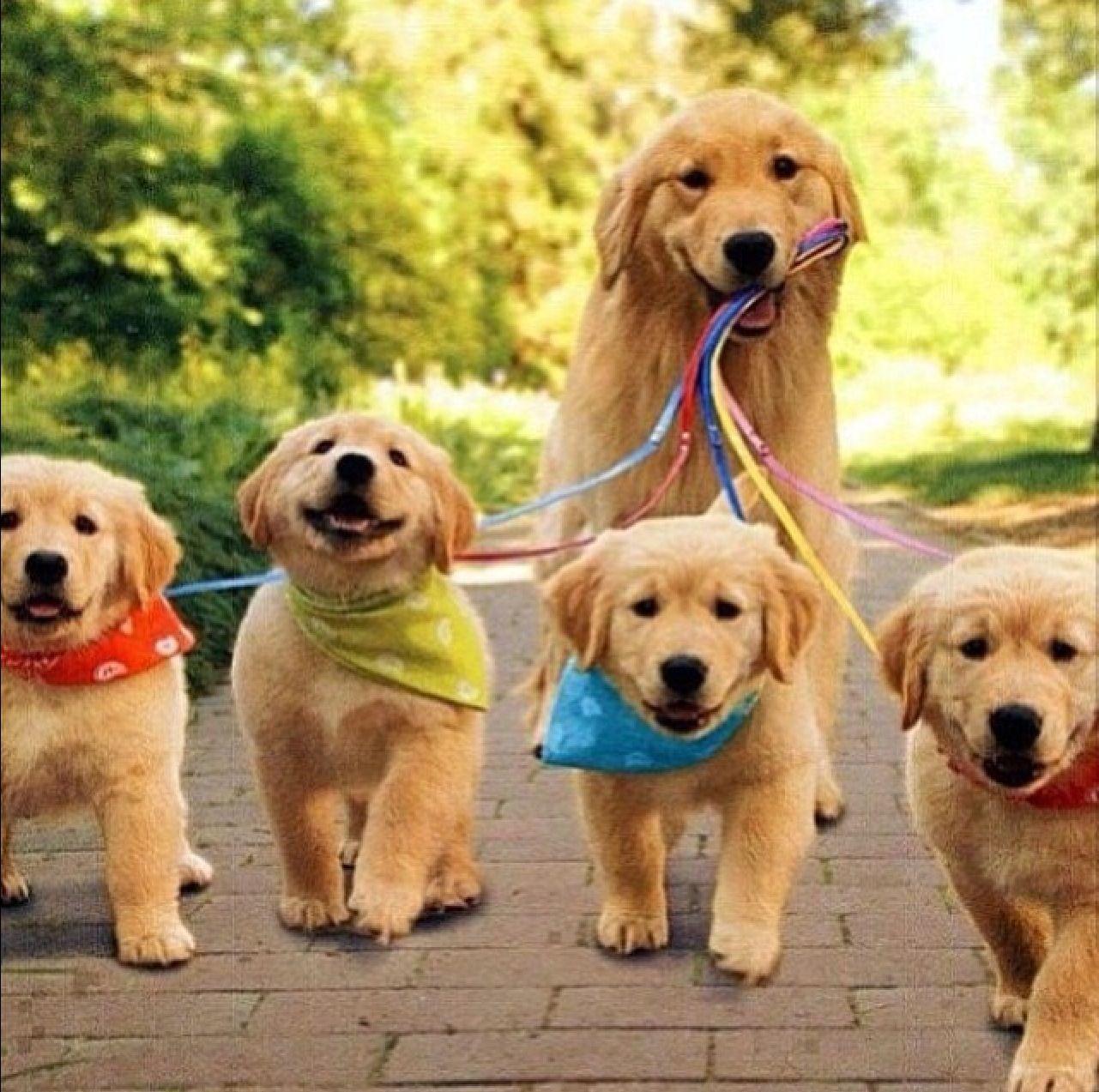 Mama Dog Walking Her Pups Pets Puppies Cute Puppies