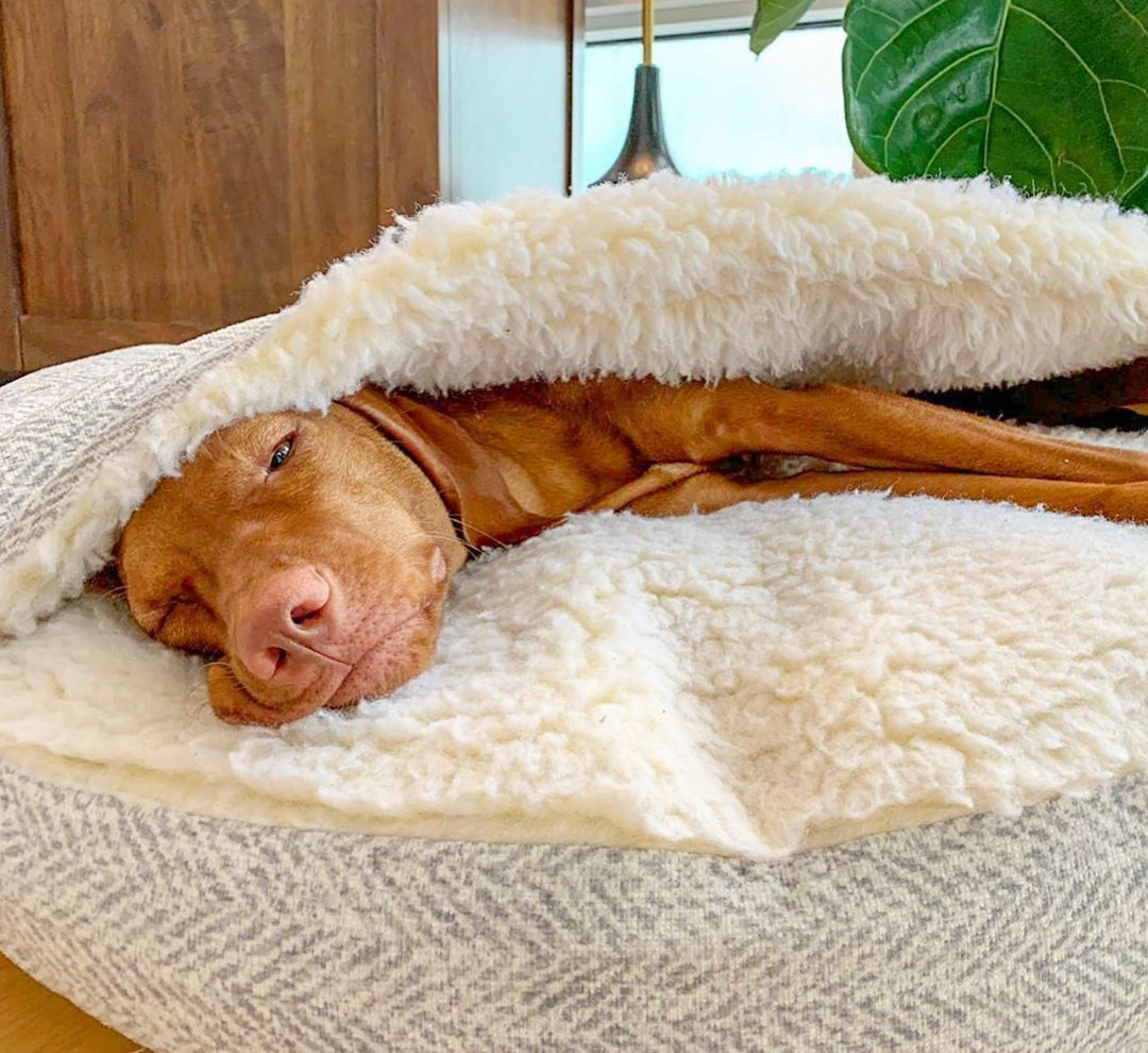 Snoozer Luxury Cozy Cave Dog Bed Show Dog 9 Colors 3 Sizes