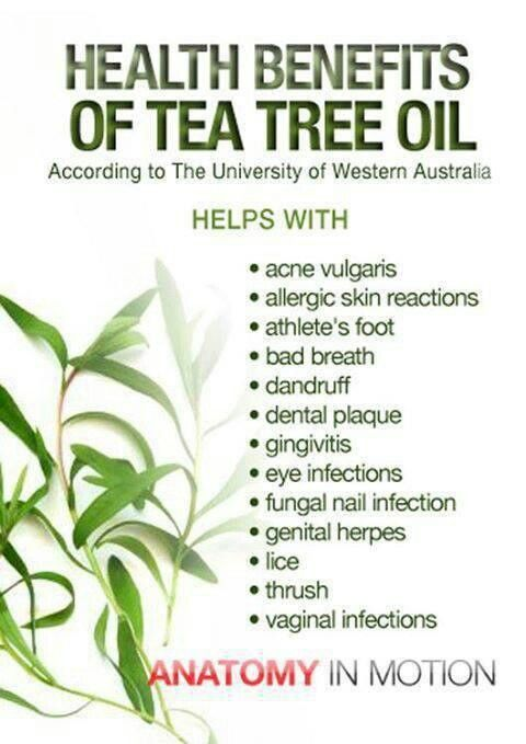 Tea Tree Oil has so many uses! Can help with anything from sinus infections to skin fungus #homeopathy