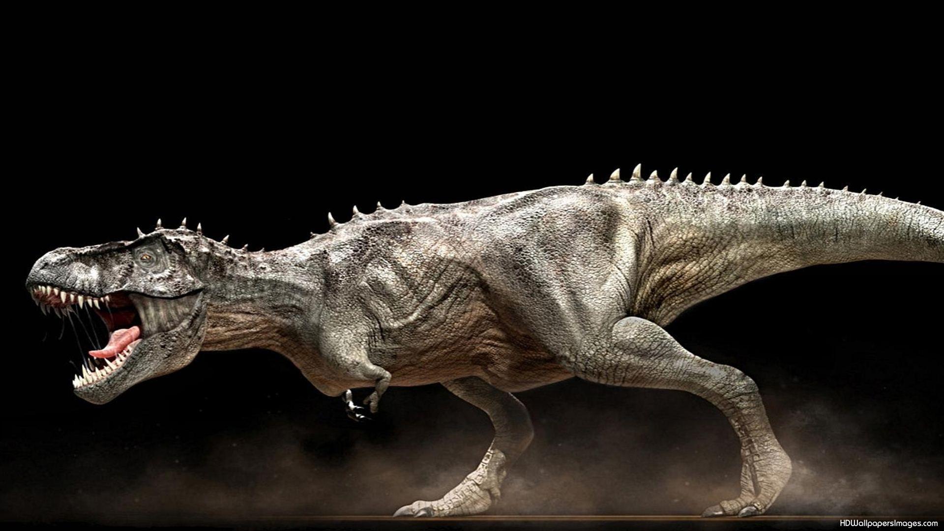 2768450dinosaurswallpapers.jpg (1920×1080) Dinosaur