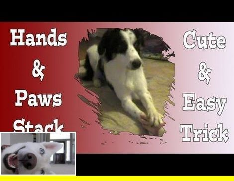 Potty Train Your Dog In 7 Days Dogtraining And Teach Your Dog Lay