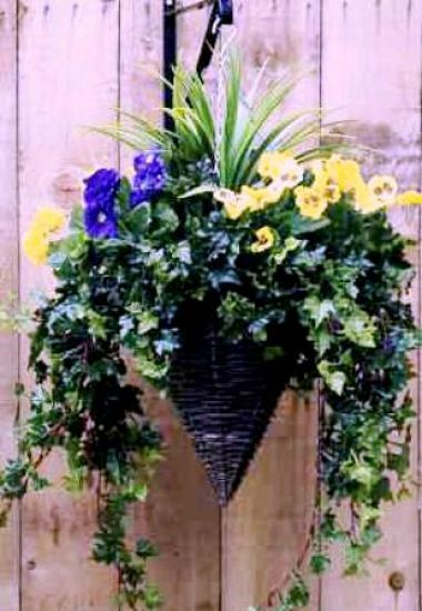 flowers for cone shaped hanging baskets | Buy Cone Shaped Hanging Baskets - Pansy, UK - Big Plant Shop