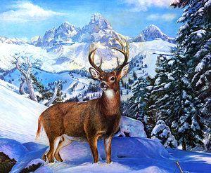 Раскраски по номерам дикий олень зимой | Картины, Олень ...