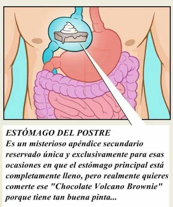 Anatomía del estomago de postres :)