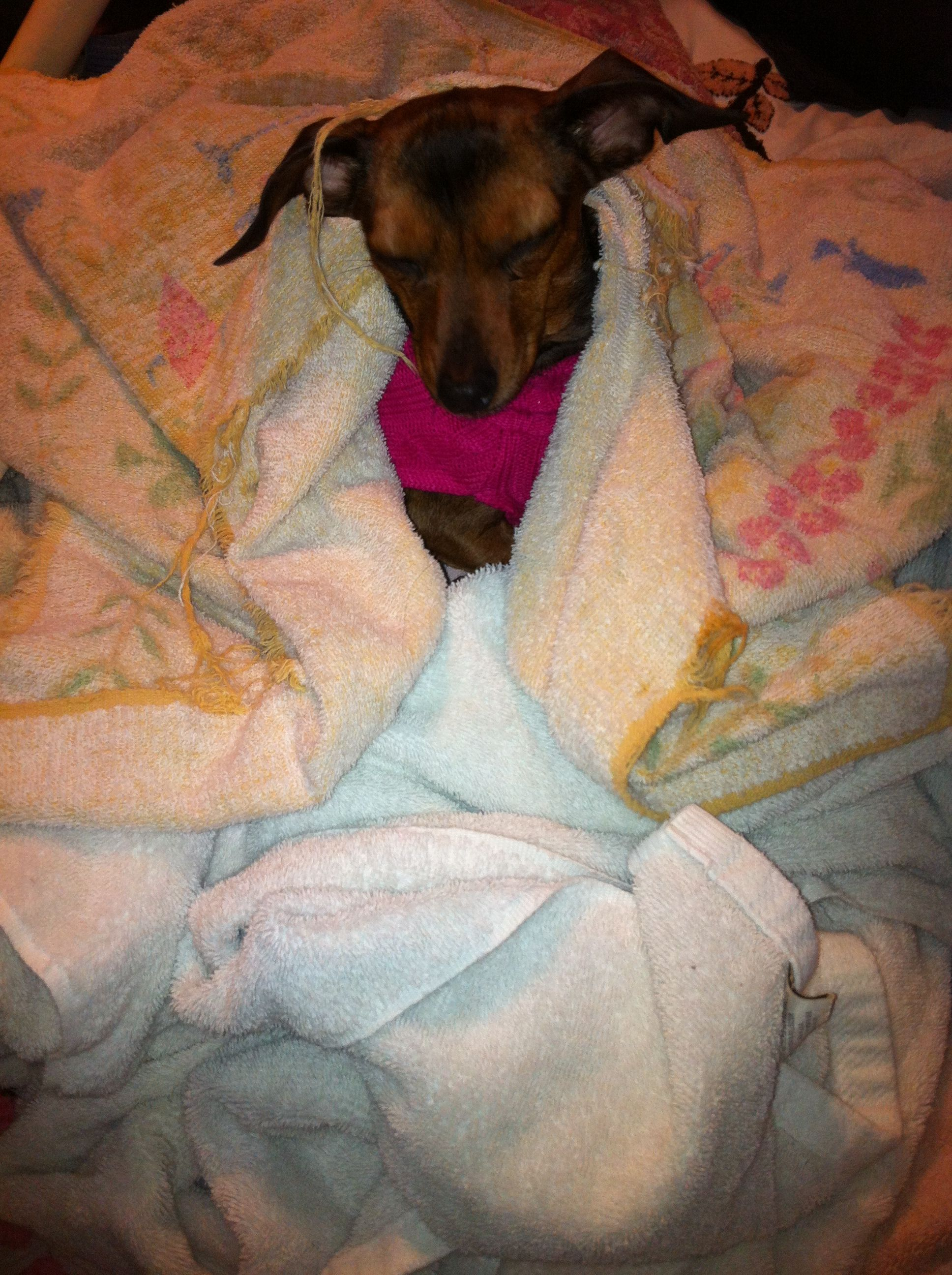 Tiny LOVES warm towels out of the dryer!