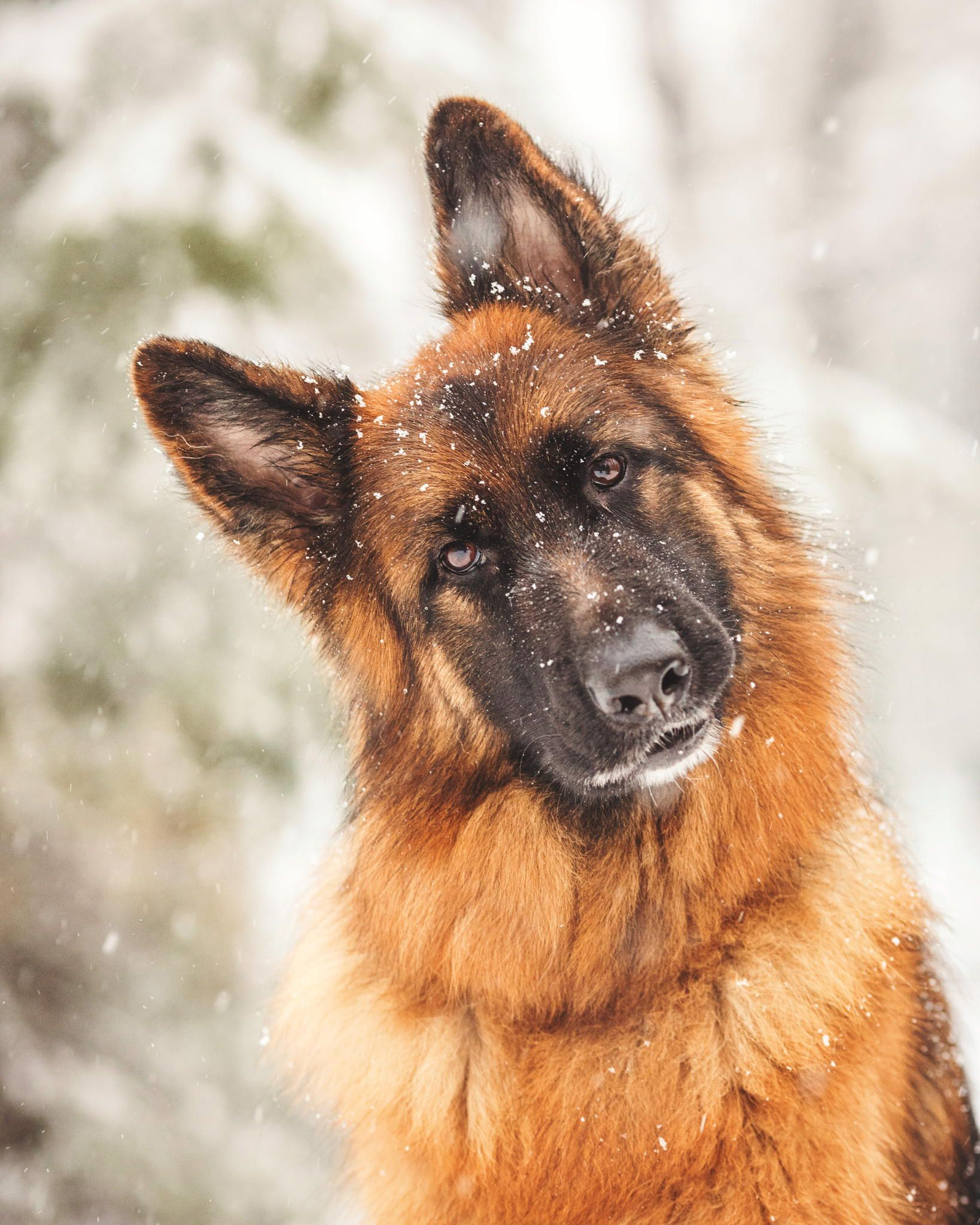 Snow Storm Dogs by Kristin Castenschiold on 500px