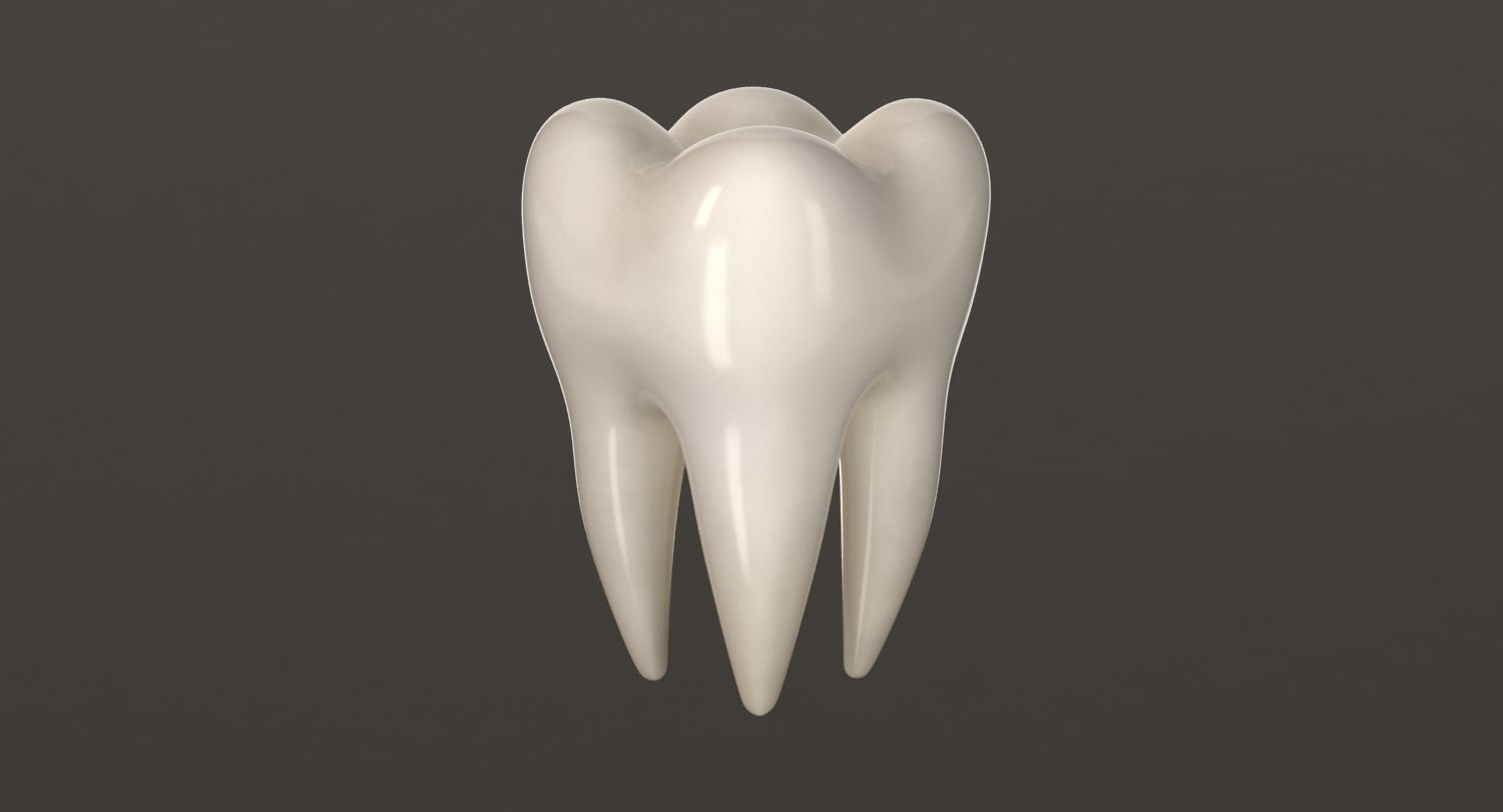3d model #teeth #molar #tooth #anatomy #people #human #mouth ...