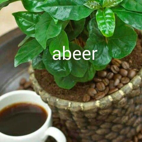 مااجمل الصباح عند سماع صوت الأذان وتسابيح واستغفار المصلين وشروق الشمس وأصوات العصافير وسقوط قطرات الندى علي أوراق Fast Growing Trees Coffee Plant Plants