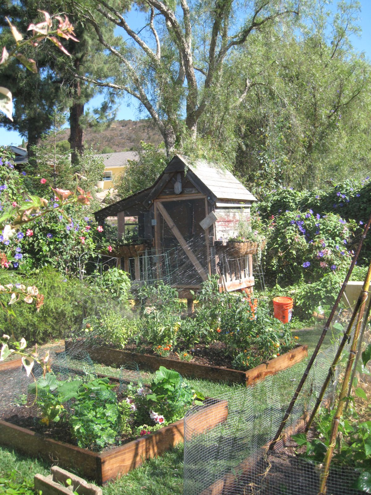 Kitchen Garden Hens French Knots Chicken Coop Potager Gardening Green Thumbs