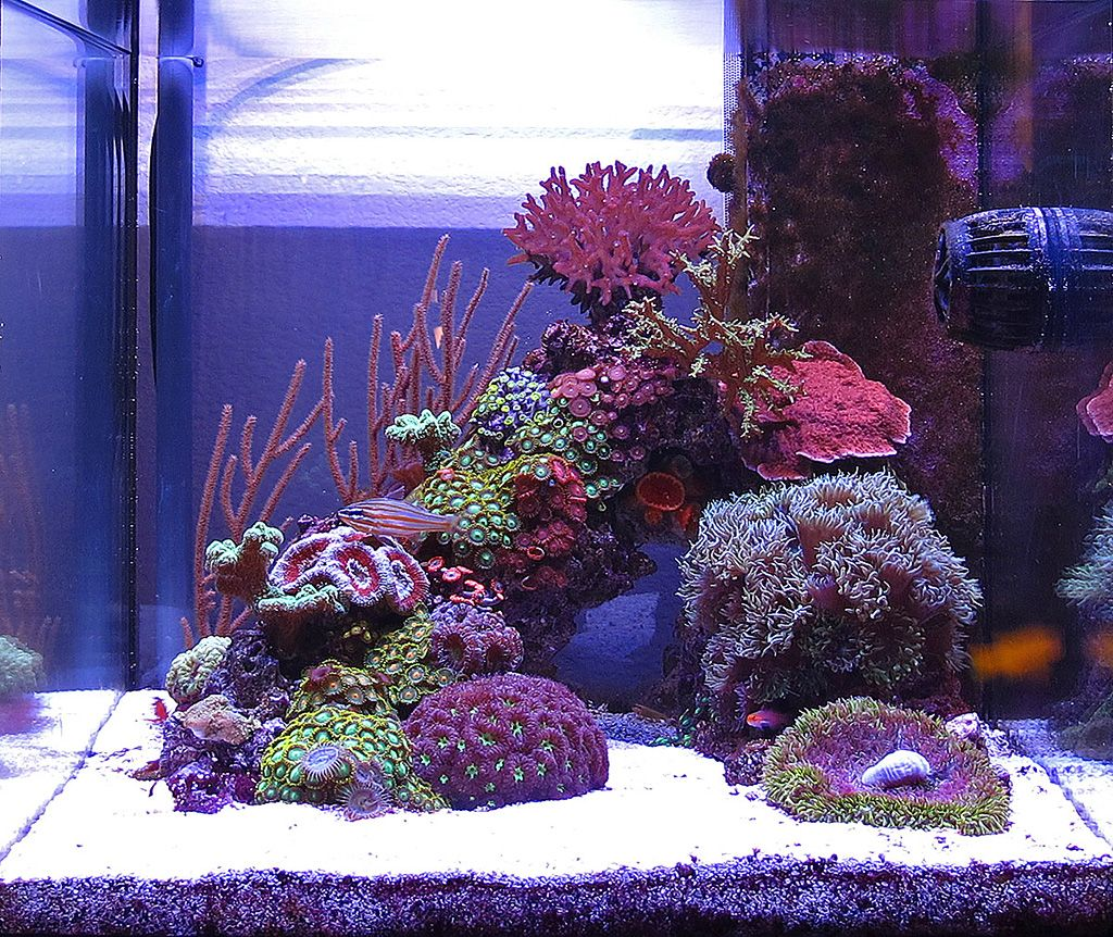 Freshwater aquarium fish profiles - Sushi 2010 Featured Nano Reefs Featured Aquariums Monthly Featured Nano Reef Aquarium Profiles