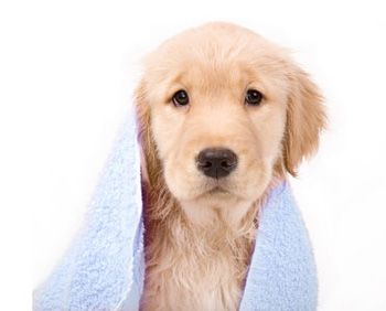 http://businessexperts.us/wp-content/uploads/2013/07/puppy-groomer.jpg