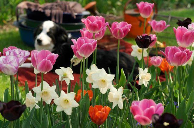 Spring Combination Ideas, Bulb Combinations, Plant Combinations, Flowerbeds Ideas, Spring Borders, ...