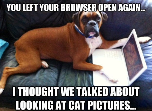 Funny Boxer Dog Meme : 25 funny dog memes: part 4 dog memes memes and funny puppies