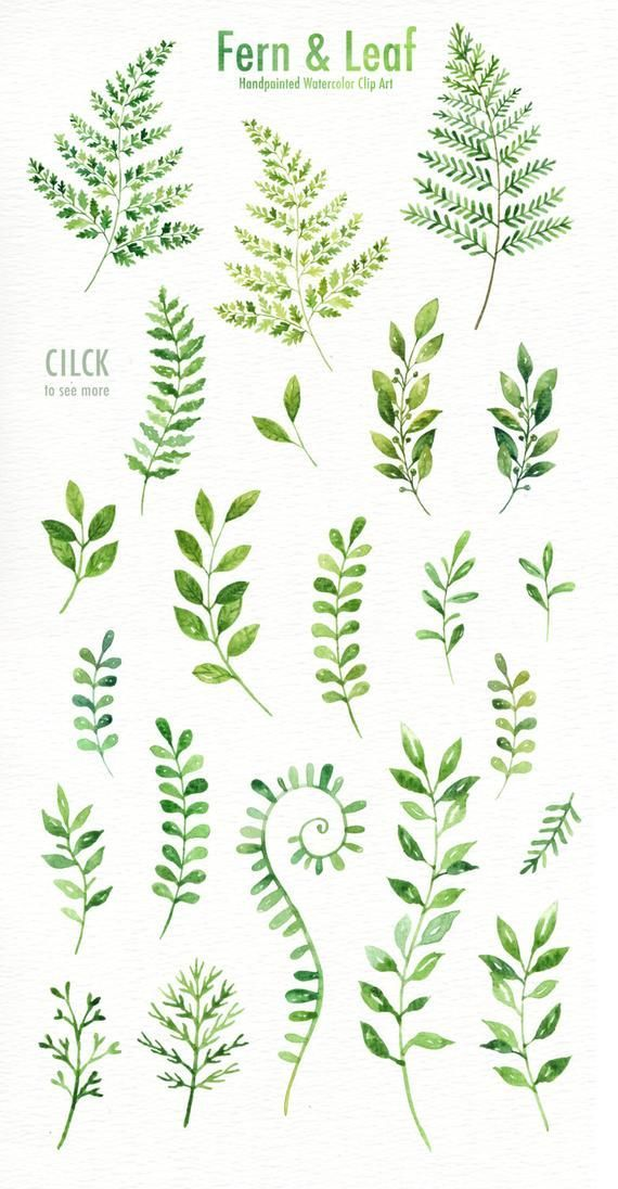 Fern & Leaf Watercolor clipart,  Forest Leaves Clipart, Green Leaf Branches, Botanical plants, Green clip art, Wedding Invitation Clip Art -   14 plants Drawing background ideas