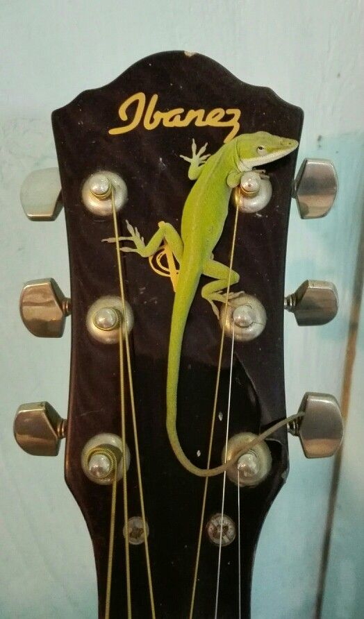 Guitars history profile Alembic Inc