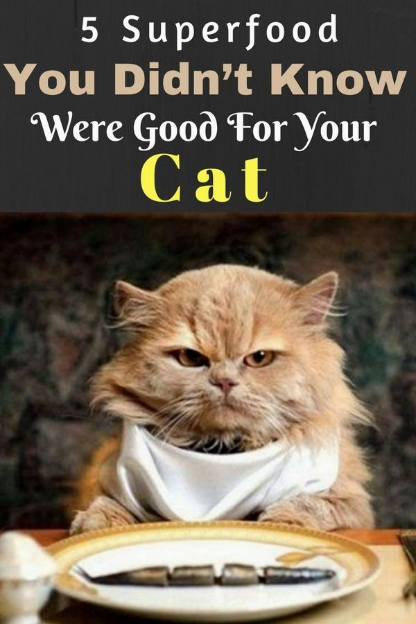 Pin by Irene Blake on Pet Food Recipes Best cat food