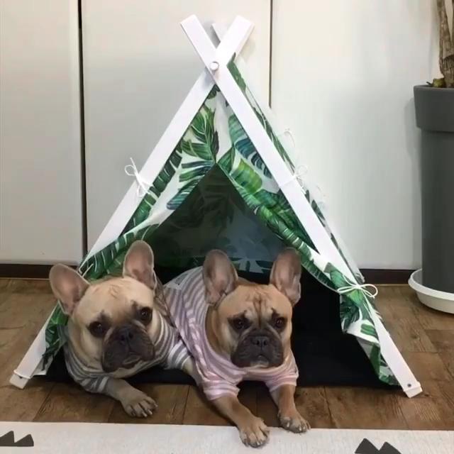 Dog teepee -   18 diy Dog tent ideas