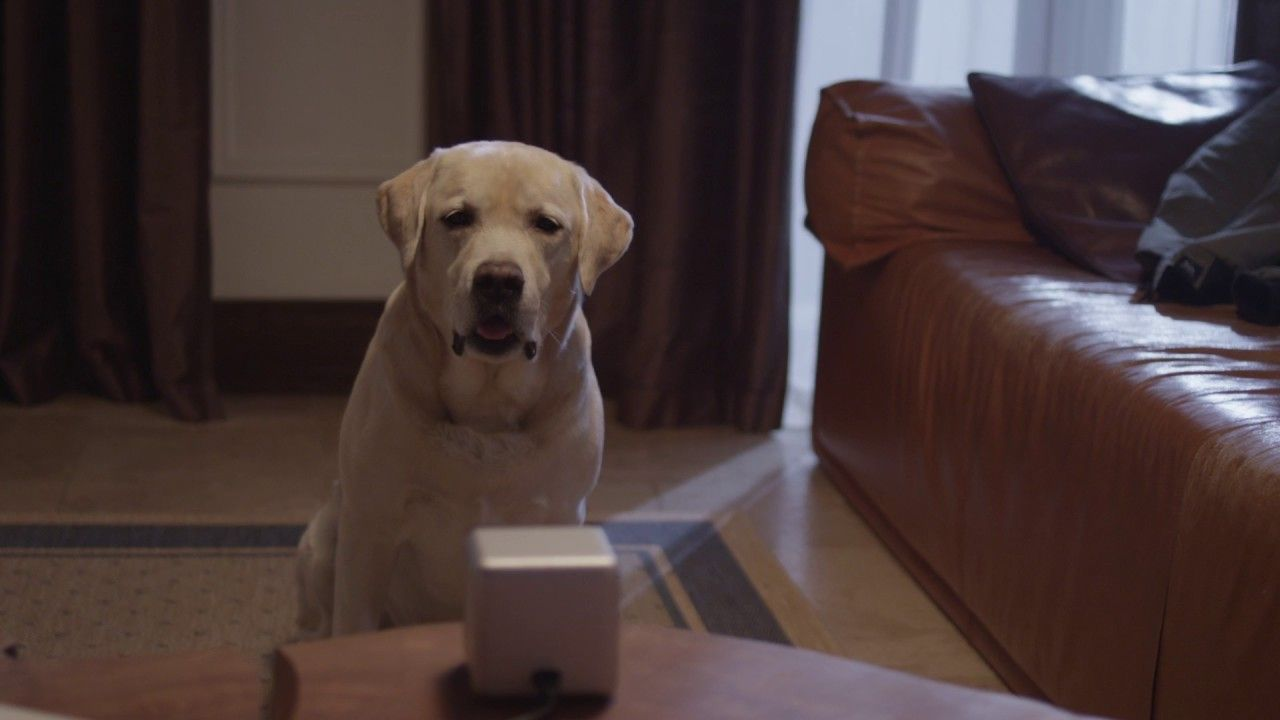 If you're on the go or running late, you jump in an Uber to catch a ride to your next destination or better yet, home. You know your pet is anxious and Petcube pet cam is a solution!